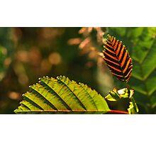 Leaf Ridges Photographic Print