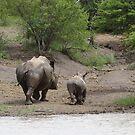 Rhino & calf by Anita Deppe