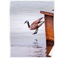 Goose Suicide Poster