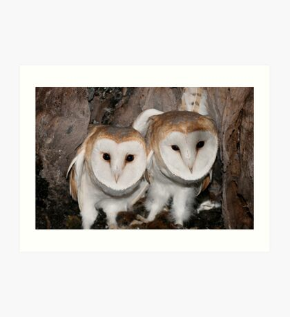Baby Barn Owls Art Print