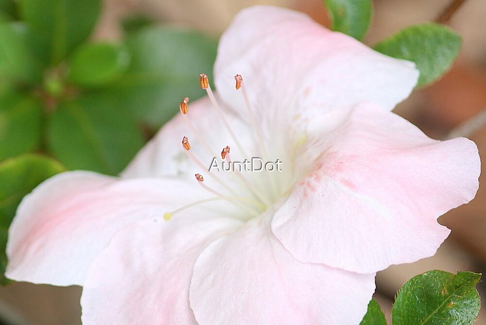 Blushing Pink Azalea by AuntDot