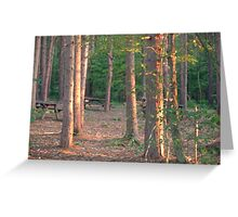 Woodland dusk Greeting Card