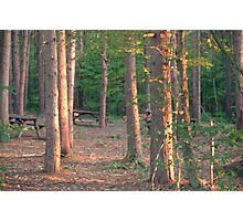 Woodland dusk Photographic Print