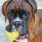 Tennis anyone??... -Boxer Dogs Series- by Evita