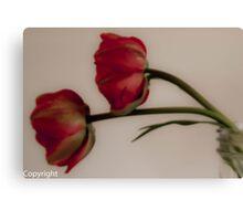 Two tulips in a mason jar  Canvas Print