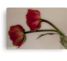 Two tulips in a mason jar  Canvas Print