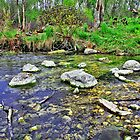 Scuppernong Springs by EBArt