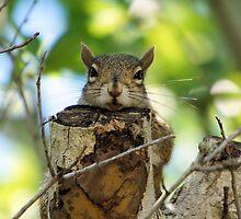 The Sleepy Squirrel by enyaw