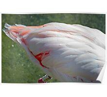 flamingo's tail Poster