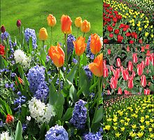 Blaze of Colour - Keukenhof Tulip Collage by BlueMoonRose