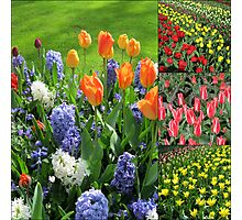 Blaze of Colour - Keukenhof Tulip Collage Photographic Print