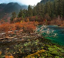 Amazing Jiuzhaigou by Thomas Dawson