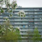 Lente in Amsterdam Zuidoost by steppeland-2