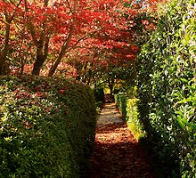 """The Walkway Through the Gardens by Warlito """"Alét"""" Mayol"""