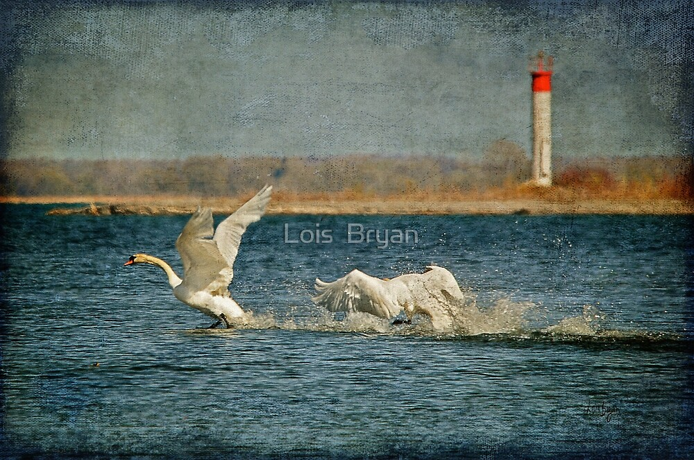 The Chase Is On by Lois  Bryan