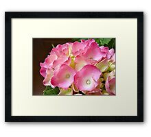 Gifted Pink Framed Print