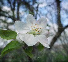 Lone Blossom by vigor