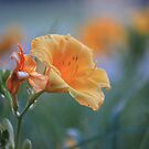 DayLilly Morning  by Brenna McKee