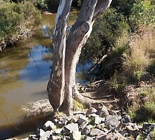 Sugarloaf Creek, Broadford, Victoria Australia by Margaret Morgan (Watkins)