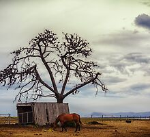 Tree In The Shed by Paul Amyes