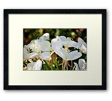 Fragrant Evening Primrose-Oenothera caespitosa Framed Print