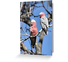 Australian Galahs Greeting Card