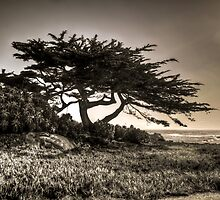 Cypress On The Coast by Agro Films