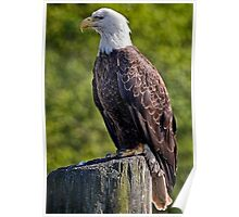 Regal Eagle Poster