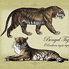 Bengal Tigers by Beesty
