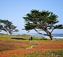 Morning Jog In Monterey by Diego Re
