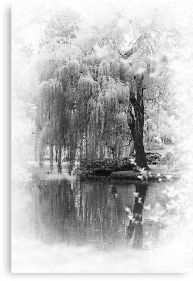 Willow Weep for Me by Wendi Donaldson
