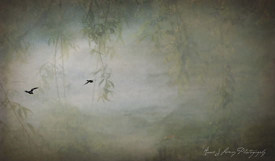 Freedom is just another word  by Annie Lemay  Photography