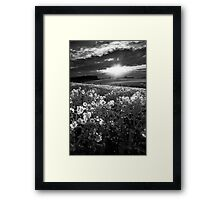 After The Rains BW Framed Print