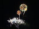 Celebration by Nevermind the Camera Photography
