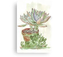"""Graptoveria """"Fred Ives"""" Canvas Print"""