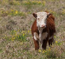 Moo by smylie