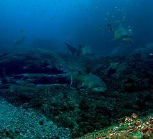 Pete with North Rock Grey Nurse Sharks by Matt-Dowse