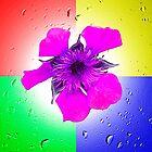 Quadrant Colours  by Ian Jeffrey