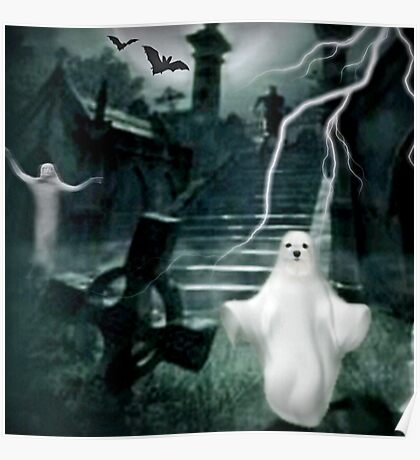 Snowdrop the Maltese Ghost ! Poster