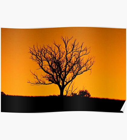 A tree somewhere Poster