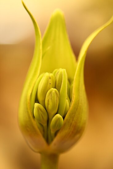 Buds in a pod by jamesnortondslr