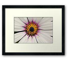 Centered flower Framed Print