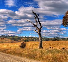 Take me Home Country Roads - Somewhere Near Oberon (Second Cut)- The HDR Experience by Philip Johnson