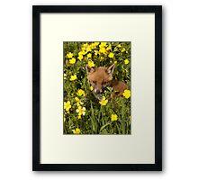 Fox Cub Framed Print