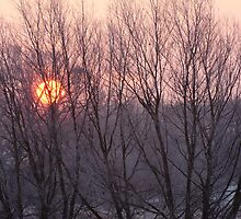 Winter sun through willow trees by Christopher Cullen