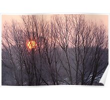 Winter sun through willow trees Poster