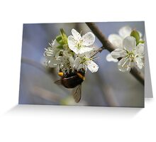 Bee In Spring Greeting Card