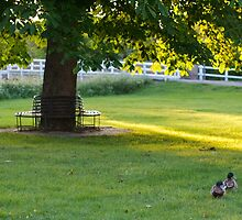 Ducks on the Village Green by Melodee Scofield