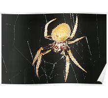 Seven-legged spider Poster