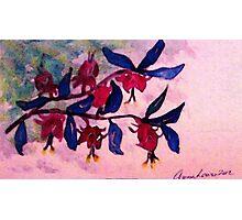 Fushia, watercolor Photographic Print